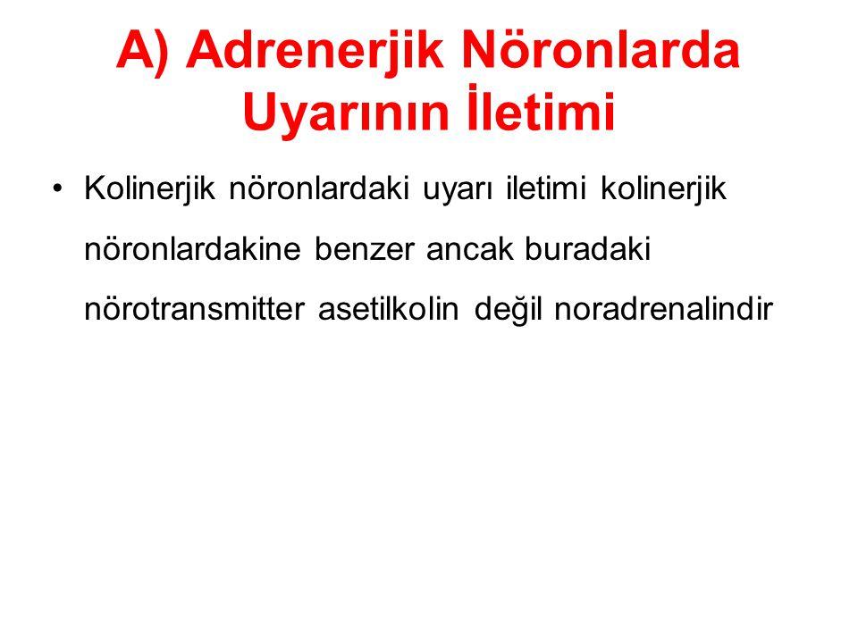 A) Adrenerjik Nöronlarda Uyarının İletimi Kolinerjik nöronlardaki uyarı iletimi kolinerjik nöronlardakine benzer ancak buradaki nörotransmitter asetilkolin değil noradrenalindir