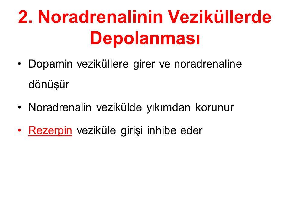 2. Noradrenalinin Veziküllerde Depolanması Dopamin veziküllere girer ve noradrenaline dönüşür Noradrenalin vezikülde yıkımdan korunur Rezerpin vezikül