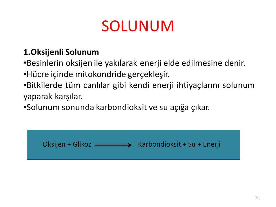 SOLUNUM 1.Oksijenli Solunum Besinlerin oksijen ile yakılarak enerji elde edilmesine denir. Hücre içinde mitokondride gerçekleşir. Bitkilerde tüm canlı