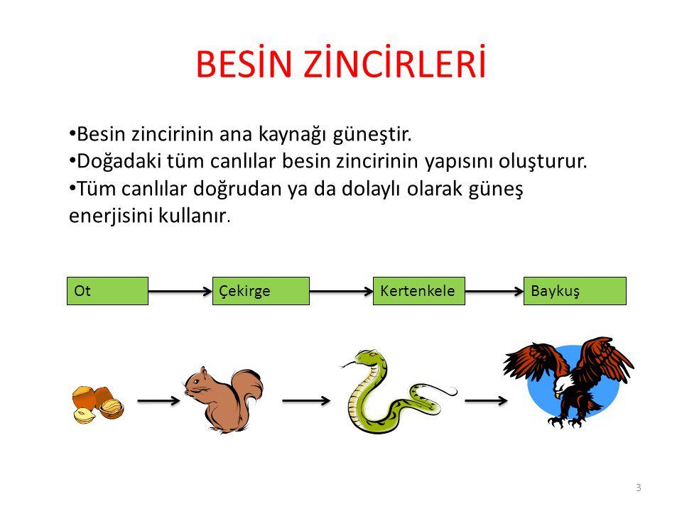 SORULAR 4.Üreticiler besin zincirinin kaçıncı halkasını oluştururlar? A.4 B.3 C.2 D.1 14