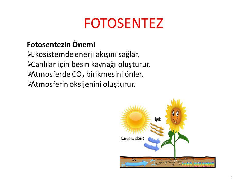 FOTOSENTEZ Fotosentezin Önemi  Ekosistemde enerji akışını sağlar.  Canlılar için besin kaynağı oluşturur.  Atmosferde CO 2 birikmesini önler.  Atm