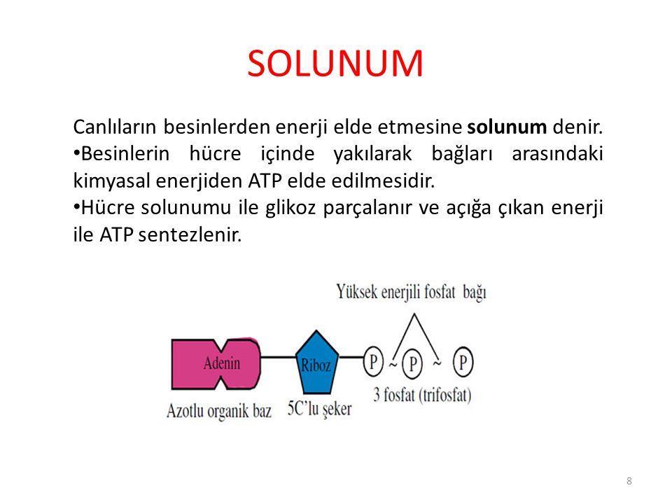 SOLUNUM Canlıların besinlerden enerji elde etmesine solunum denir. Besinlerin hücre içinde yakılarak bağları arasındaki kimyasal enerjiden ATP elde ed