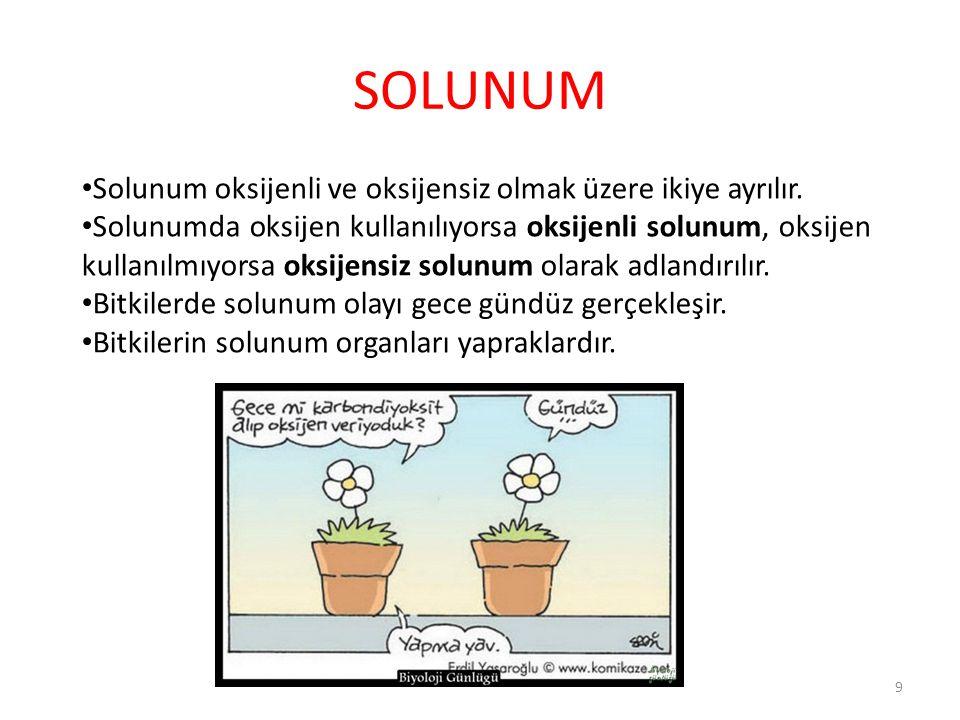 SOLUNUM Solunum oksijenli ve oksijensiz olmak üzere ikiye ayrılır. Solunumda oksijen kullanılıyorsa oksijenli solunum, oksijen kullanılmıyorsa oksijen