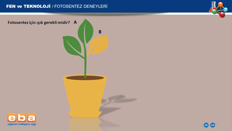FEN ve TEKNOLOJİ / FOTOSENTEZ DENEYLERİ 3 A B Fotosentez için ışık gerekli midir?