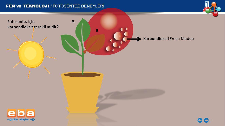 FEN ve TEKNOLOJİ / FOTOSENTEZ DENEYLERİ 6 A B Karbondioksit Emen Madde Fotosentez için karbondioksit gerekli midir?