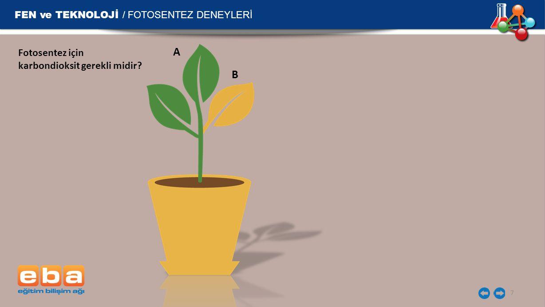 FEN ve TEKNOLOJİ / FOTOSENTEZ DENEYLERİ 8 AB İyot