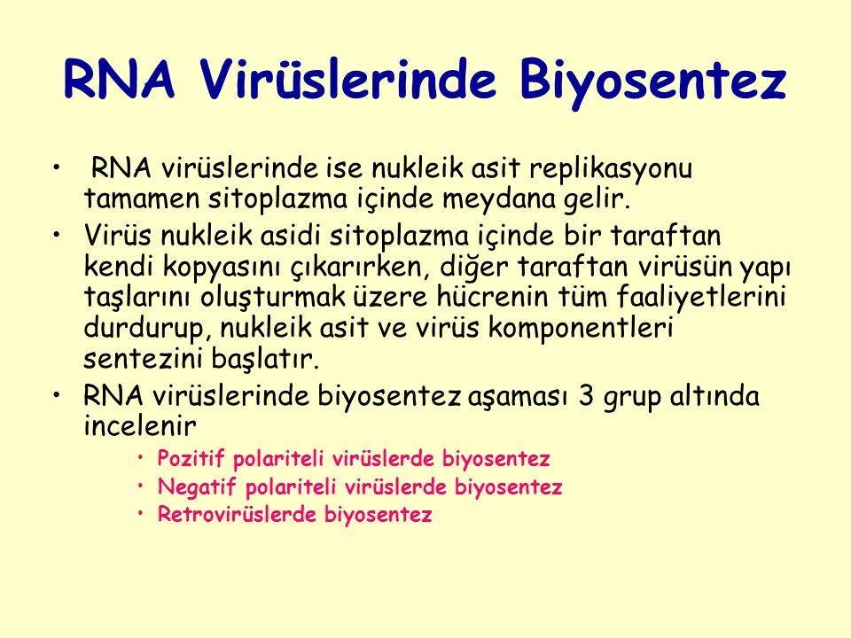 RNA Virüslerinde Biyosentez RNA virüslerinde ise nukleik asit replikasyonu tamamen sitoplazma içinde meydana gelir.
