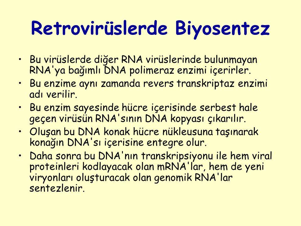 Retrovirüslerde Biyosentez Bu virüslerde diğer RNA virüslerinde bulunmayan RNA ya bağımlı DNA polimeraz enzimi içerirler.