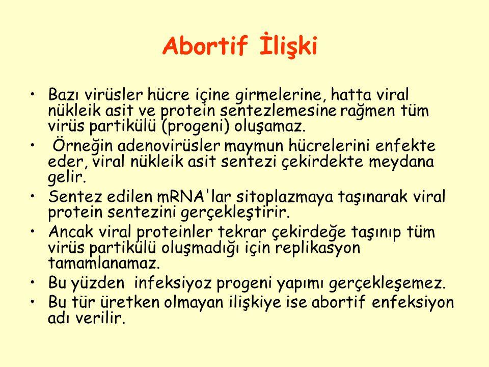 Abortif İlişki Bazı virüsler hücre içine girmelerine, hatta viral nükleik asit ve protein sentezlemesine rağmen tüm virüs partikülü (progeni) oluşamaz.