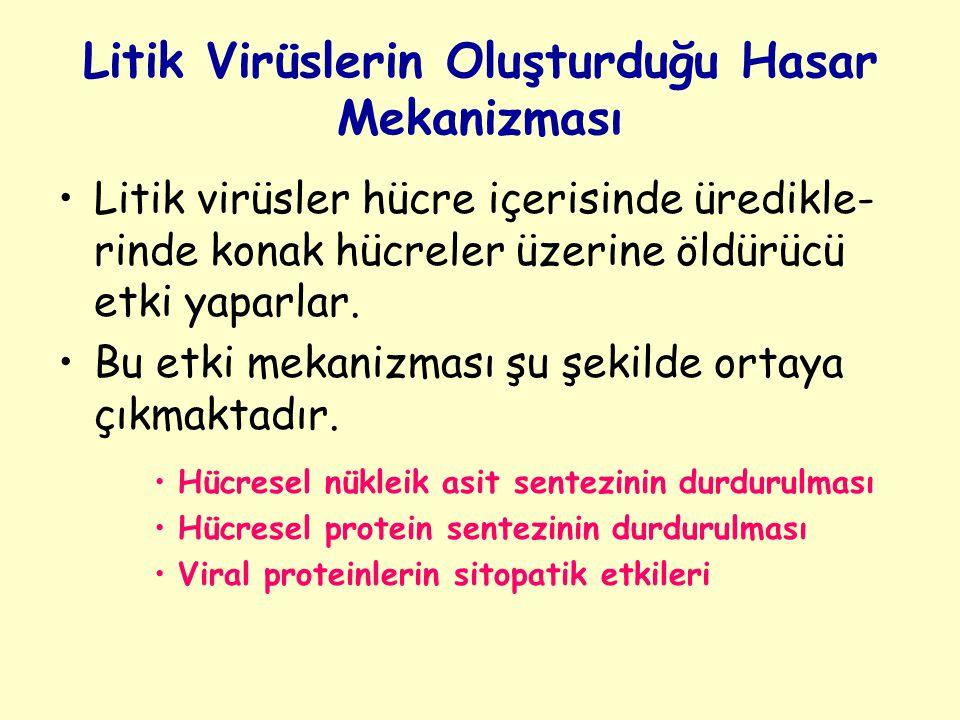 Litik Virüslerin Oluşturduğu Hasar Mekanizması Litik virüsler hücre içerisinde üredikle- rinde konak hücreler üzerine öldürücü etki yaparlar.