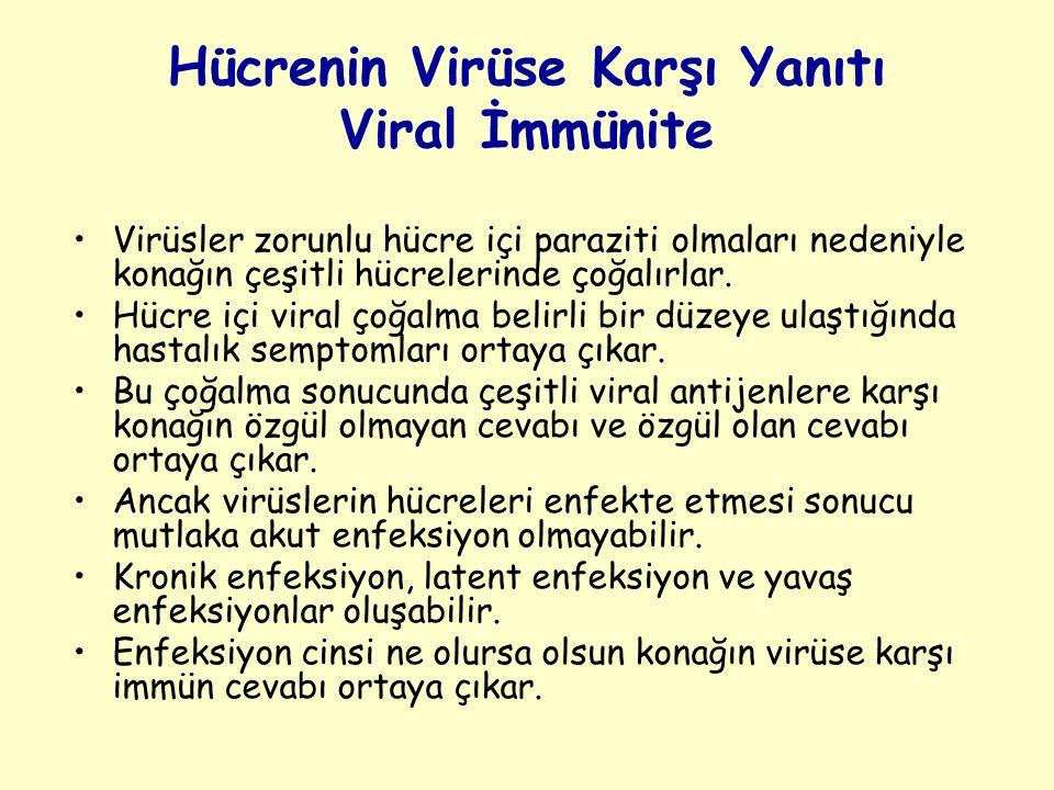 Hücrenin Virüse Karşı Yanıtı Viral İmmünite Virüsler zorunlu hücre içi paraziti olmaları nedeniyle konağın çeşitli hücrelerinde çoğalırlar.
