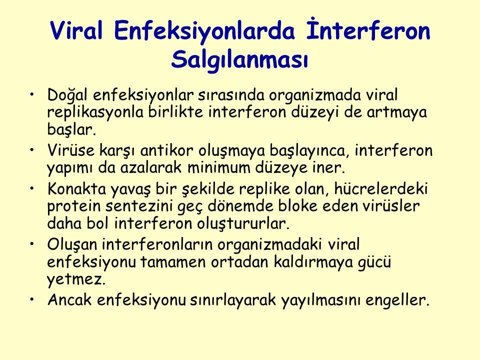 Viral Enfeksiyonlarda İnterferon Salgılanması Doğal enfeksiyonlar sırasında organizmada viral replikasyonla birlikte interferon düzeyi de artmaya başlar.