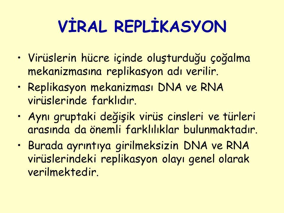 Viral Replikasyon Aşamaları 1 – Adsorbsiyon 2 – Penetrasyon 3 – Kapsidin soyulması 4 – Biyosentez 5 – Olgun virüs partiküllerinin oluşumu 6 – Viral partiküllerin hücreden çıkışı