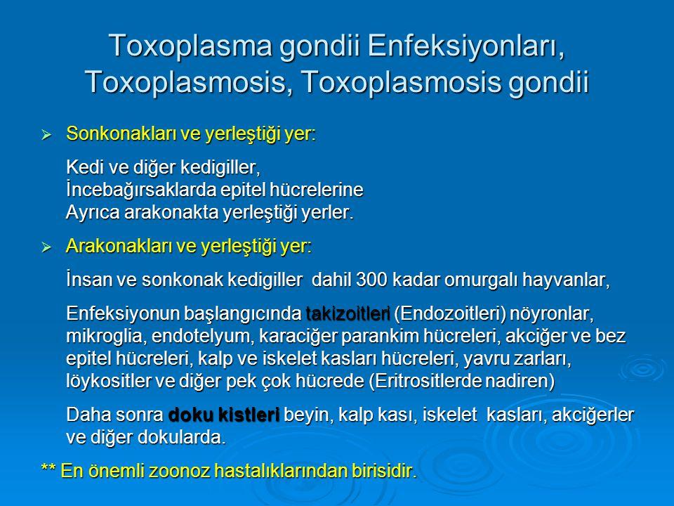 Toxoplasma gondii Enfeksiyonları, Toxoplasmosis, Toxoplasmosis gondii  Sonkonakları ve yerleştiği yer: Kedi ve diğer kedigiller, İncebağırsaklarda ep