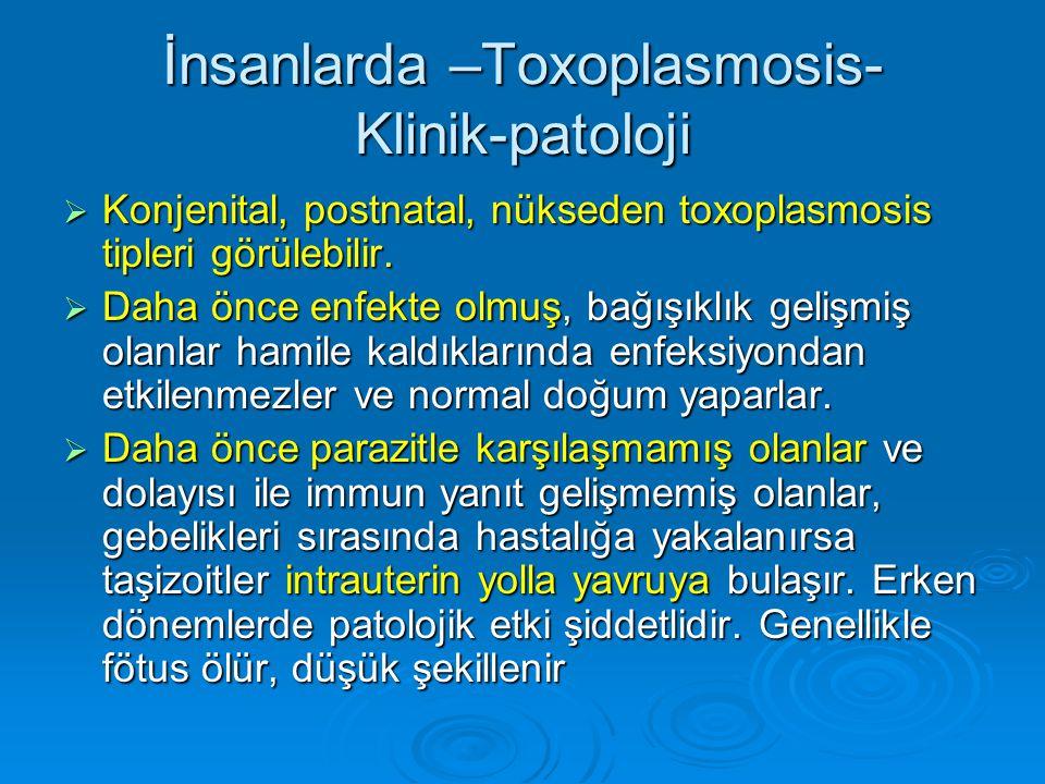 İnsanlarda –Toxoplasmosis- Klinik-patoloji  Konjenital, postnatal, nükseden toxoplasmosis tipleri görülebilir.  Daha önce enfekte olmuş, bağışıklık