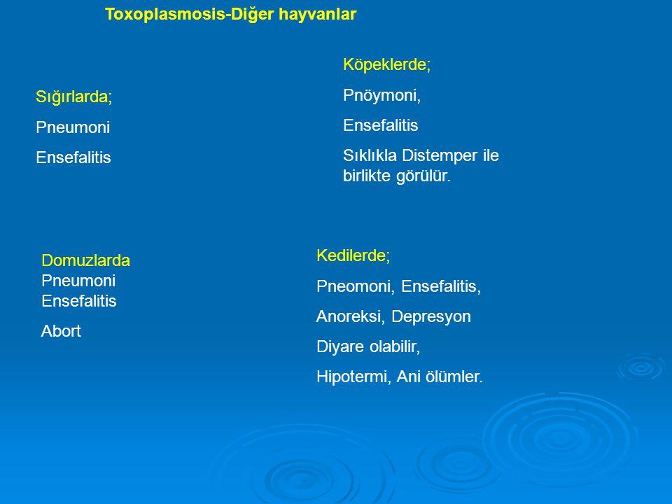 Sığırlarda; Pneumoni Ensefalitis Domuzlarda Pneumoni Ensefalitis Abort Köpeklerde; Pnöymoni, Ensefalitis Sıklıkla Distemper ile birlikte görülür. Kedi