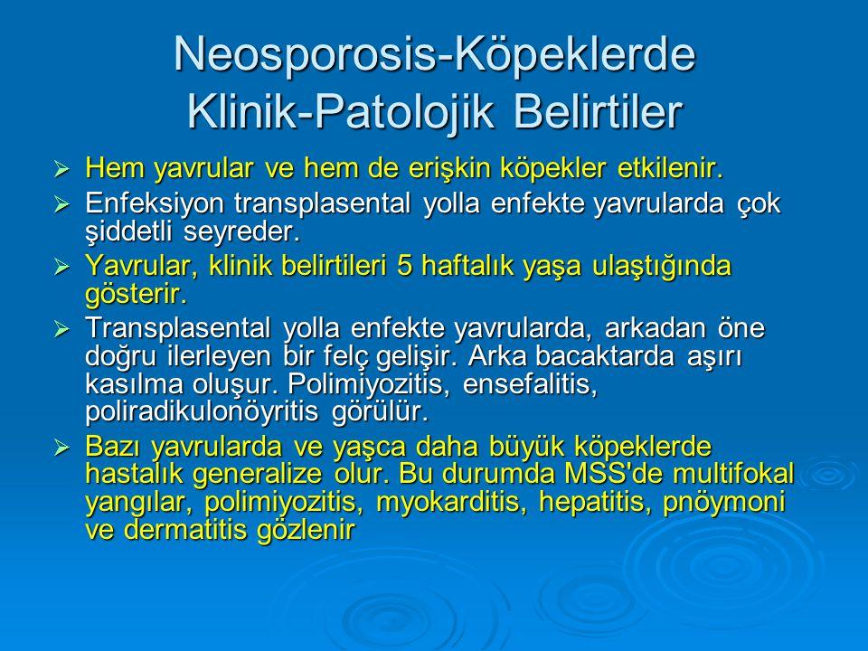 Neosporosis-Köpeklerde Klinik-Patolojik Belirtiler  Hem yavrular ve hem de erişkin köpekler etkilenir.  Enfeksiyon transplasental yolla enfekte yavr