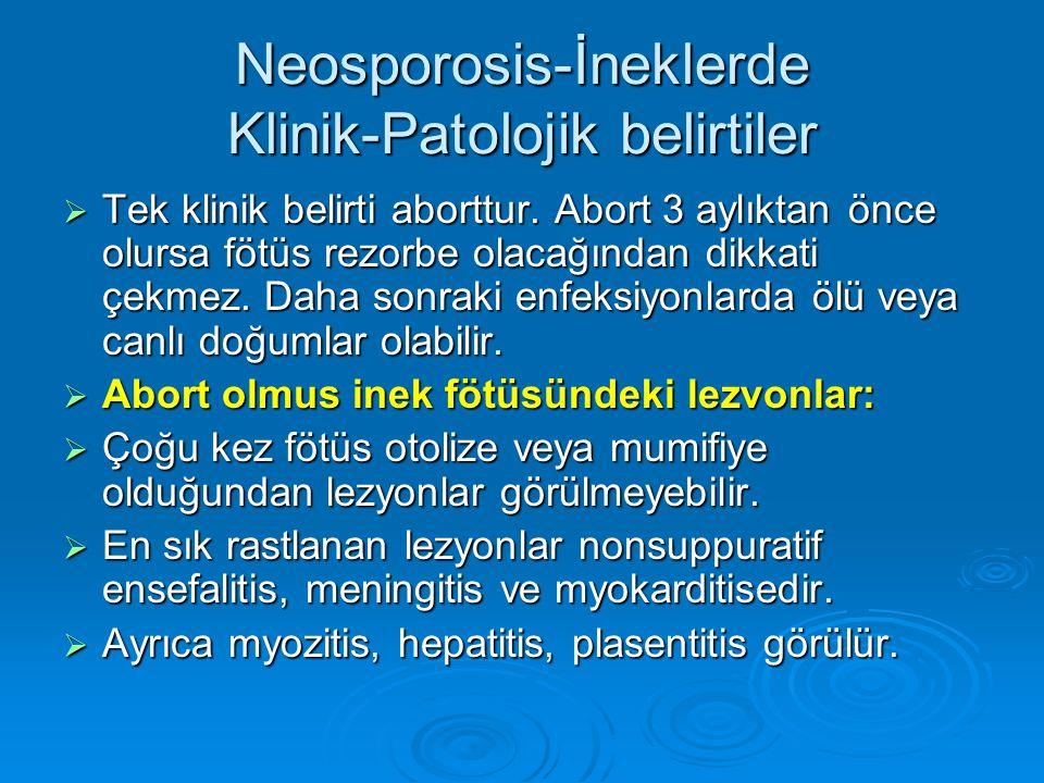 Neosporosis-İneklerde Klinik-Patolojik belirtiler  Tek klinik belirti aborttur. Abort 3 aylıktan önce olursa fötüs rezorbe olacağından dikkati çekmez
