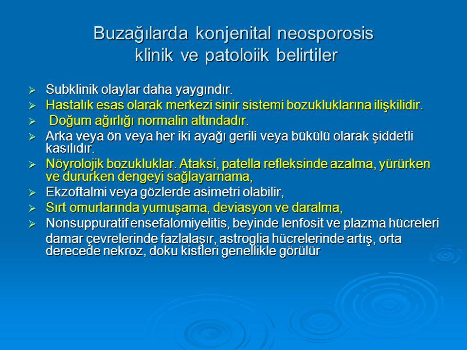 Buzağılarda konjenital neosporosis klinik ve patoloiik belirtiler  Subklinik olaylar daha yaygındır.  Hastalık esas olarak merkezi sinir sistemi boz