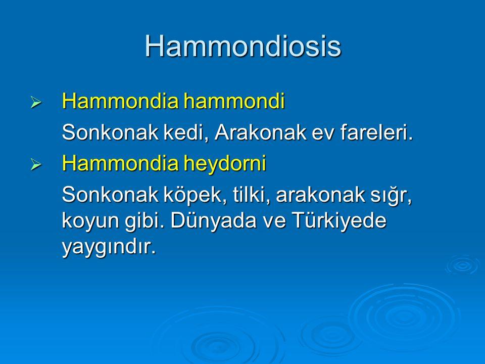 Hammondiosis  Hammondia hammondi Sonkonak kedi, Arakonak ev fareleri.  Hammondia heydorni Sonkonak köpek, tilki, arakonak sığr, koyun gibi. Dünyada