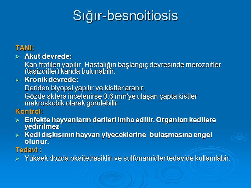 Sığır-besnoitiosis TANI:  Akut devrede: Kan frotileri yapılır. Hastalığın başlangıç devresinde merozoitler (taşizoitler) kanda bulunabilir.  Kronik