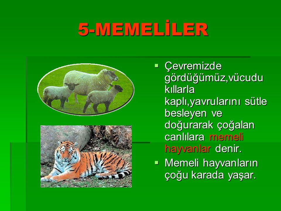 5-MEMELİLER  Çevremizde gördüğümüz,vücudu kıllarla kaplı,yavrularını sütle besleyen ve doğurarak çoğalan canlılara memeli hayvanlar denir.  Memeli h