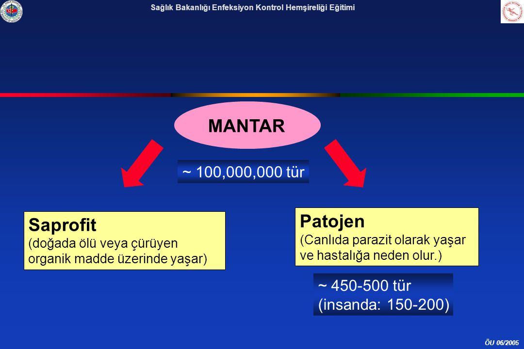 ÖU 06/2005 Sağlık Bakanlığı Enfeksiyon Kontrol Hemşireliği Eğitimi Saprofit (doğada ölü veya çürüyen organik madde üzerinde yaşar) Patojen (Canlıda parazit olarak yaşar ve hastalığa neden olur.) MANTAR ~ 100,000,000 tür ~ 450-500 tür (insanda: 150-200)