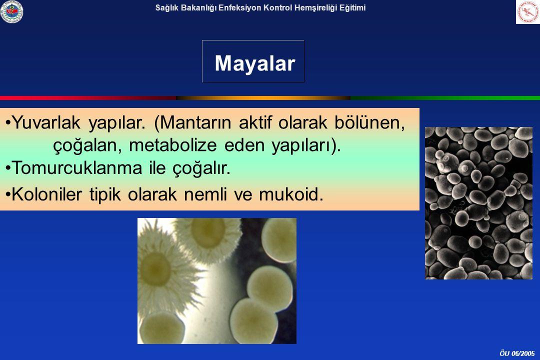 ÖU 06/2005 Sağlık Bakanlığı Enfeksiyon Kontrol Hemşireliği Eğitimi Mayalar Yuvarlak yapılar.