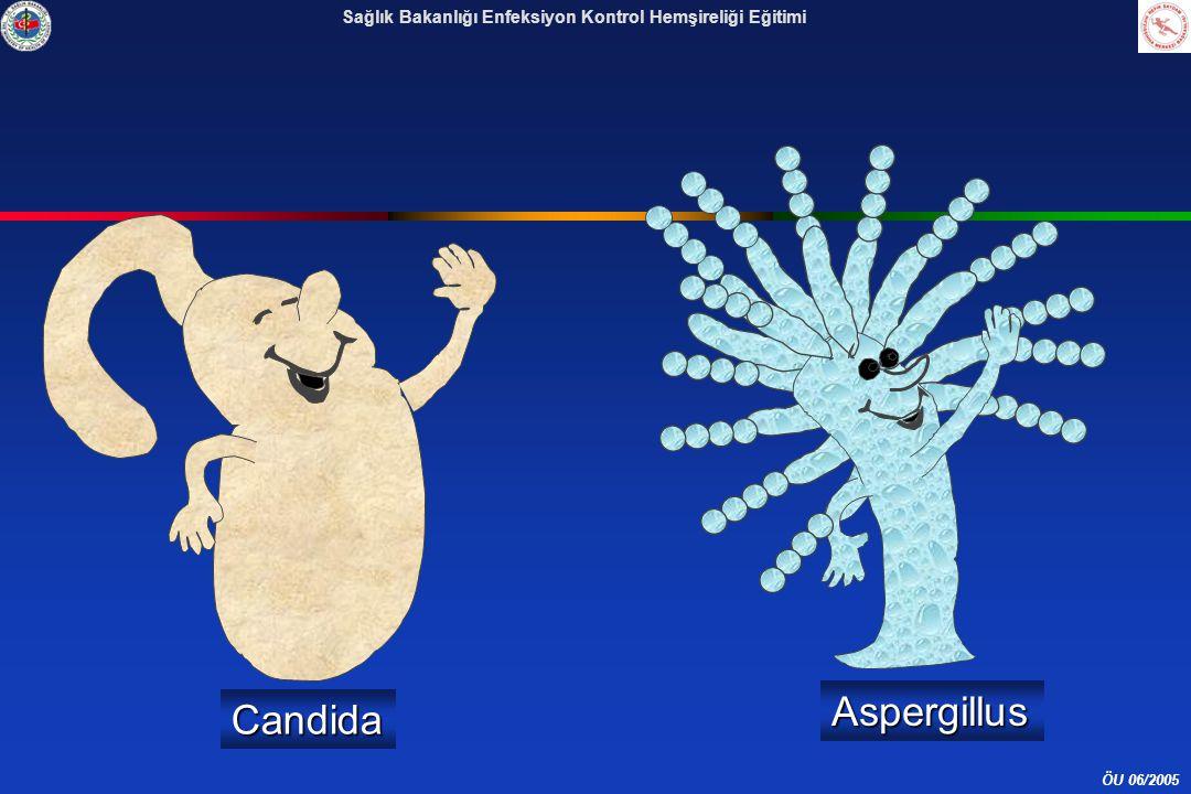 ÖU 06/2005 Sağlık Bakanlığı Enfeksiyon Kontrol Hemşireliği EğitimiCandida Aspergillus