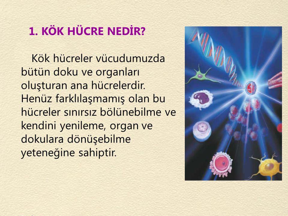 1. KÖK HÜCRE NEDİR? Kök hücreler vücudumuzda bütün doku ve organları oluşturan ana hücrelerdir. Henüz farklılaşmamış olan bu hücreler sınırsız bölüneb