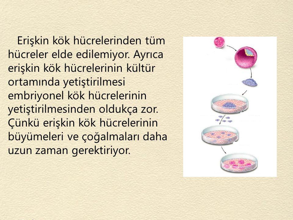 Erişkin kök hücrelerinden tüm hücreler elde edilemiyor. Ayrıca erişkin kök hücrelerinin kültür ortamında yetiştirilmesi embriyonel kök hücrelerinin ye