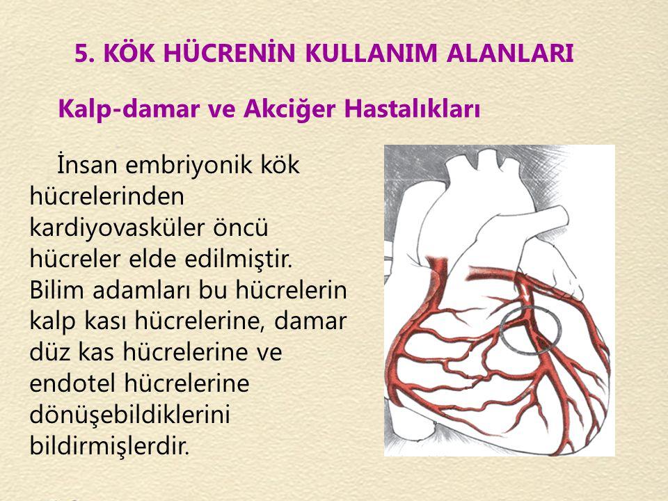 Kalp-damar ve Akciğer Hastalıkları 5. KÖK HÜCRENİN KULLANIM ALANLARI İnsan embriyonik kök hücrelerinden kardiyovasküler öncü hücreler elde edilmiştir.