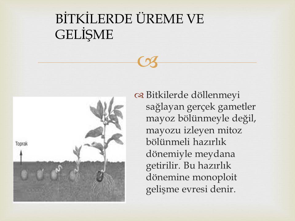   Bitkilerde döllenmeyi sağlayan gerçek gametler mayoz bölünmeyle değil, mayozu izleyen mitoz bölünmeli hazırlık dönemiyle meydana getirilir.