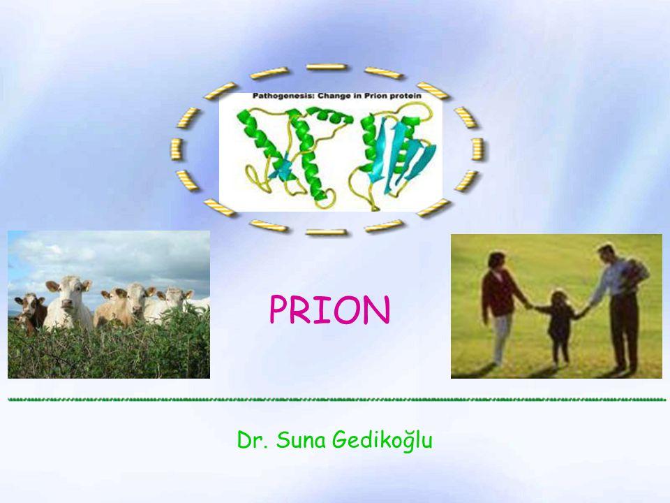 PrP c PrP sc PrP c hücre membranında yarı ömrü 5 saat kadardır Glikozil fosfatidil inozitol (GPI) aracılığı ile hücre içine girer Endolizozom içine alınır PrP sc dönüşümü muhtemelen hücre içine alım sırasında olmaktadır PrP sc sadece sitoplazmada toplu olarak saptanmaktadır