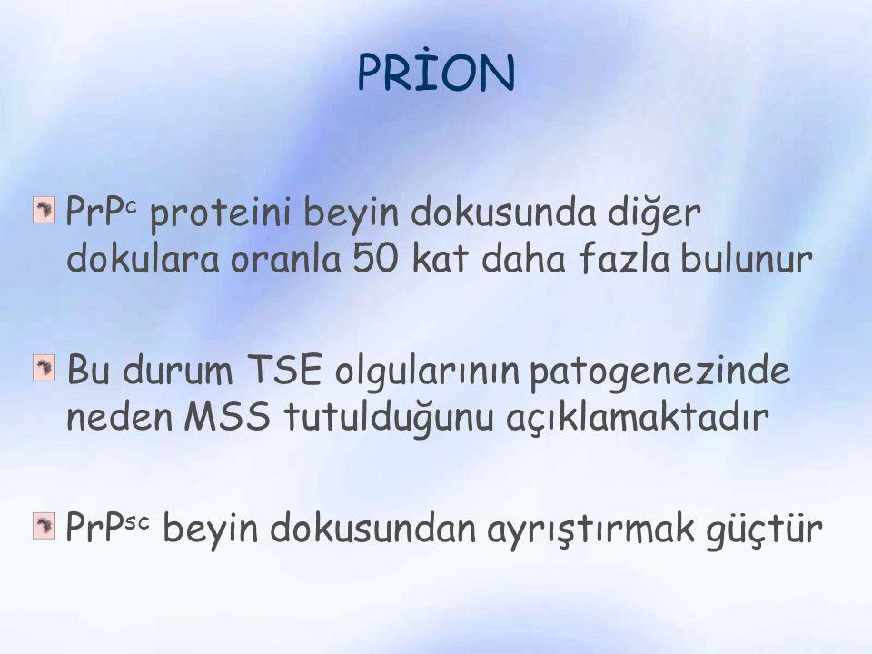 PRİON PrP c proteini beyin dokusunda diğer dokulara oranla 50 kat daha fazla bulunur Bu durum TSE olgularının patogenezinde neden MSS tutulduğunu açık