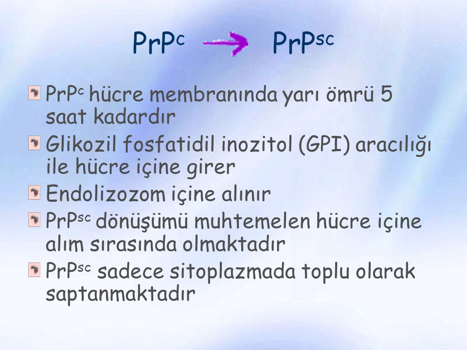 PrP c PrP sc PrP c hücre membranında yarı ömrü 5 saat kadardır Glikozil fosfatidil inozitol (GPI) aracılığı ile hücre içine girer Endolizozom içine al