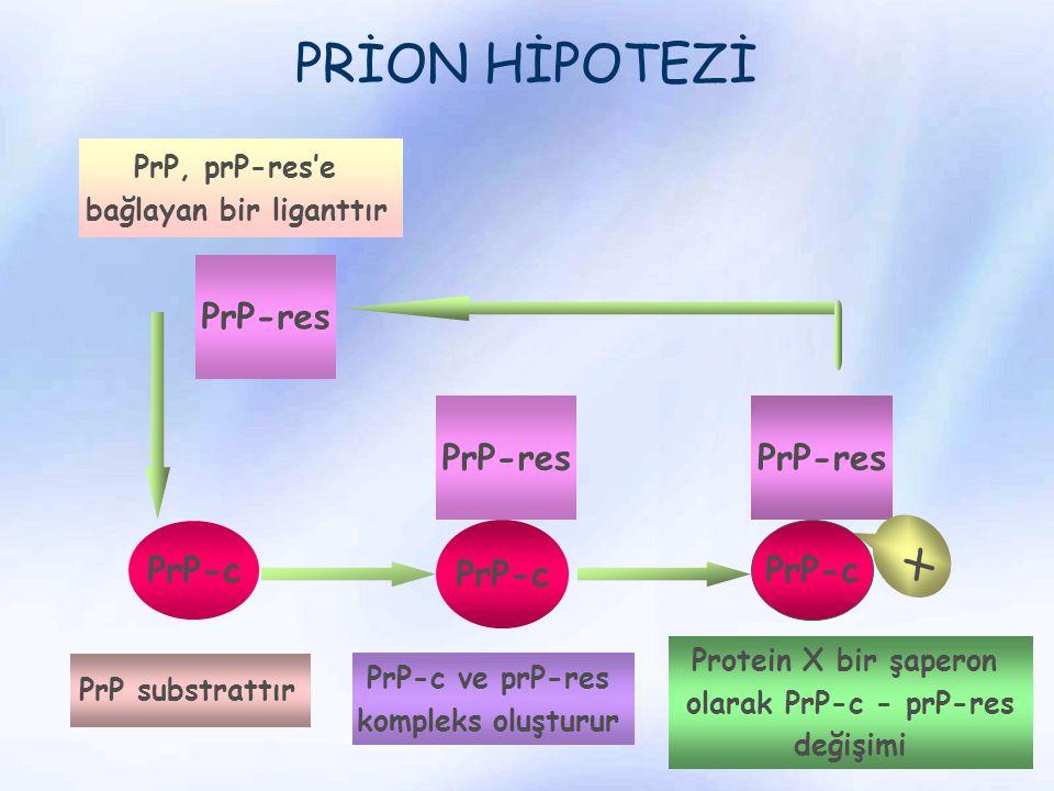 PRİON HİPOTEZİ PrP-res PrP-c PrP-res PrP-c x PrP substrattır PrP, prP-res'e bağlayan bir liganttır PrP-c ve prP-res kompleks oluşturur Protein X bir ş