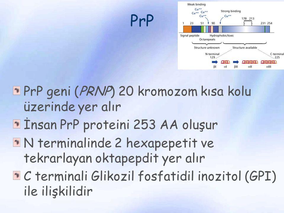 PrP PrP geni (PRNP) 20 kromozom kısa kolu üzerinde yer alır İnsan PrP proteini 253 AA oluşur N terminalinde 2 hexapepetit ve tekrarlayan oktapepdit ye