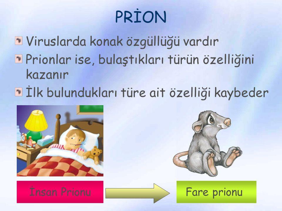 PRİON Viruslarda konak özgüllüğü vardır Prionlar ise, bulaştıkları türün özelliğini kazanır İlk bulundukları türe ait özelliği kaybeder İnsan Prionu F