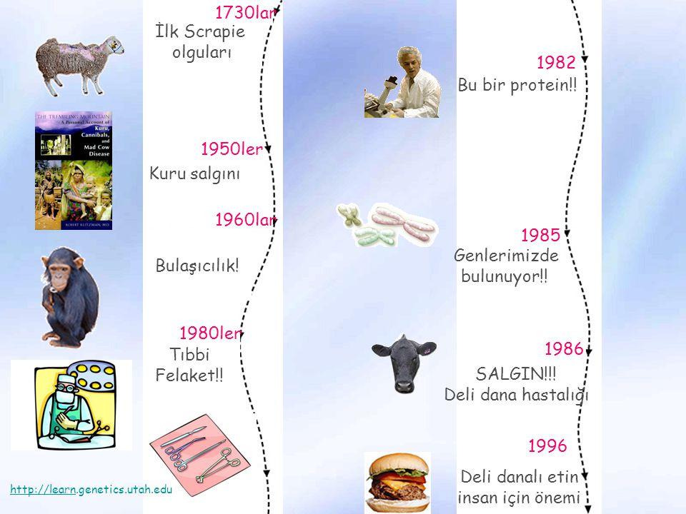 İlk Scrapie olguları 1730lar Kuru salgını 1950ler 1960lar Bulaşıcılık! Tıbbi Felaket!! 1980ler Bu bir protein!! 1982 Genlerimizde bulunuyor!! 1985 SAL