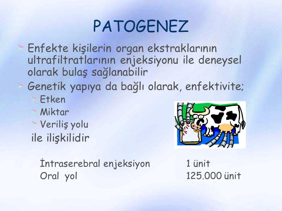 PATOGENEZ Enfekte kişilerin organ ekstraklarının ultrafiltratlarının enjeksiyonu ile deneysel olarak bulaş sağlanabilir Genetik yapıya da bağlı olarak