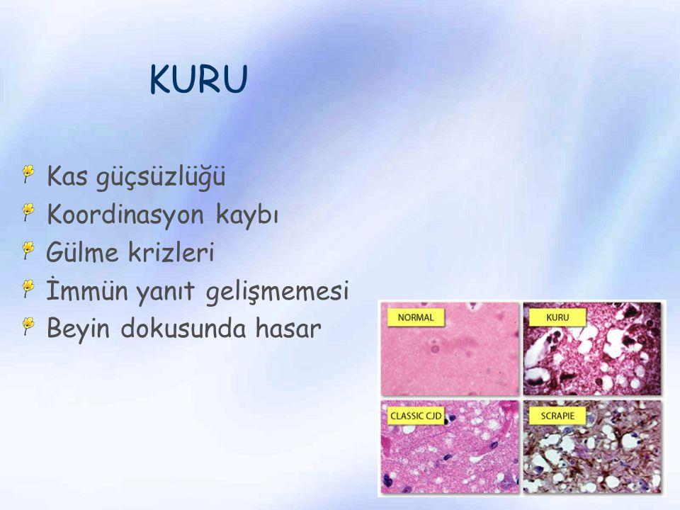 PrP C PrP Sc PRION PROTEİNLERİNİN AGREGE OLACAK FORMA DÖNÜŞÜMÜ PrP C – PrP hücresel izoformu PrP SC – scrapie benzer izoformu