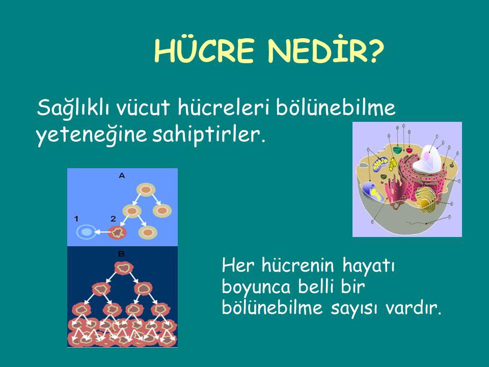 HÜCRE NEDİR? Sağlıklı vücut hücreleri bölünebilme yeteneğine sahiptirler. Her hücrenin hayatı boyunca belli bir bölünebilme sayısı vardır.