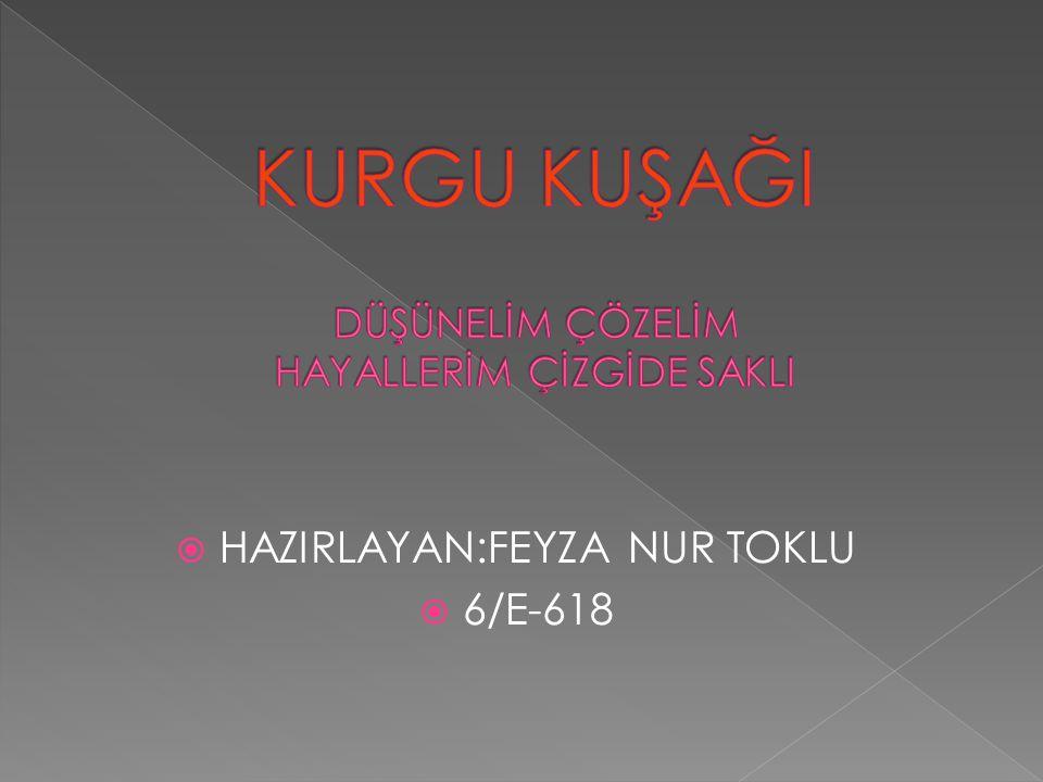  HAZIRLAYAN:FEYZA NUR TOKLU  6/E-618
