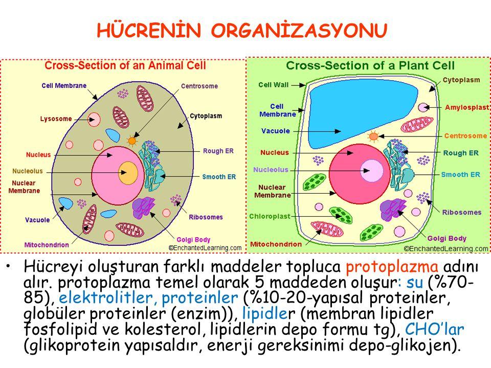 5. Tüm hücreler ekstraselüler sıvının oluşturduğu sabit ortam içinde yaşarlar 6. Sabit ortam, yeterli derişimde su, oksijen, AA, yağ, CHO 7. Ekstrasel
