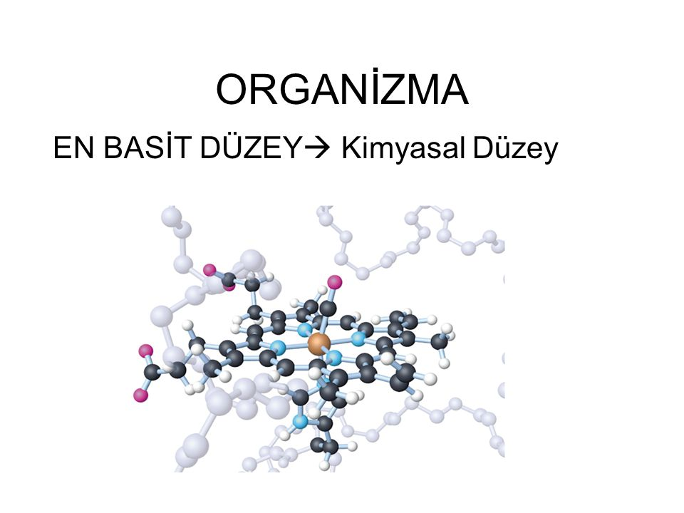 ORGANİZMA EN BASİT DÜZEY  Kimyasal Düzey
