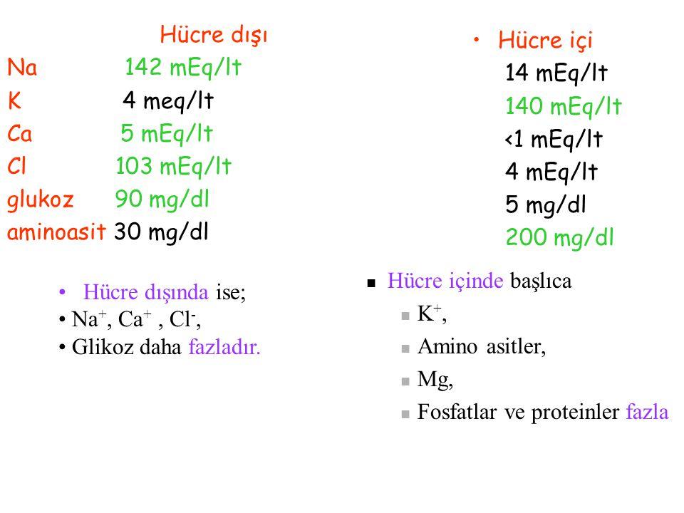 SIVI DAĞILIMINI ETKİLEYEN FAKTÖRLER ELEKTROLİTLER Vücutta en çok sodyum ve potasyum vardır. Extrasellüler sıvı hacmini en çok etkileyen iyon sodyumdur