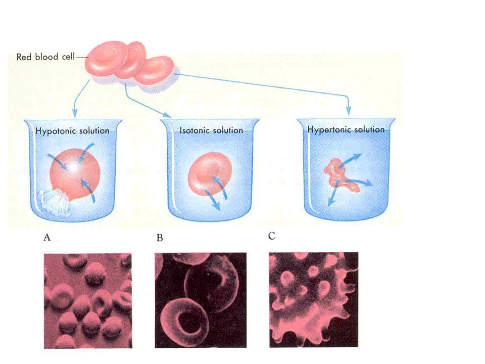 İzotonik solusyon: Hücre içi ile aynı madde konsantrasyonuna sahip sıvılara denir (300mOsm/L geçemeyen madde kon.). Hipotonik solusyon: Madde konsantr
