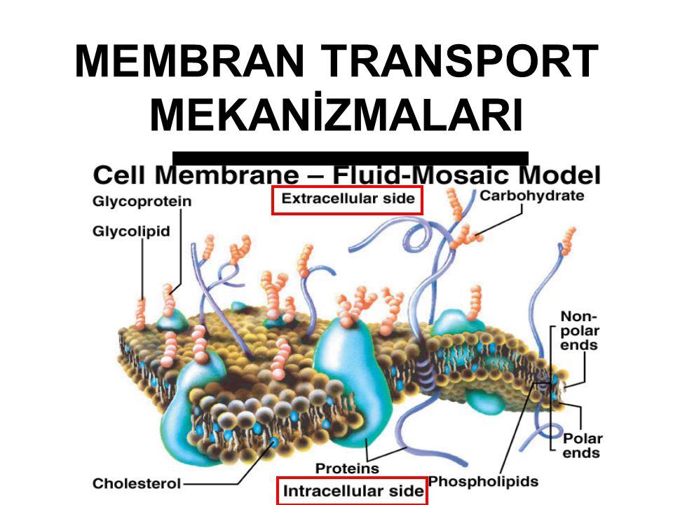 Proteinler ve Amino asitler Proteinler Bir hücrenin kuru ağırlığının yaklaşık % 50 – 60' nı oluştururlar. Aminoasitlerden oluşurlar Yapısal proteinler