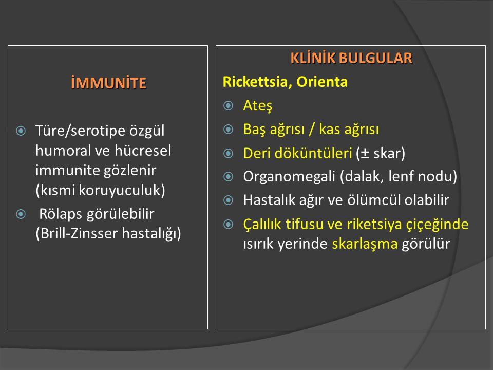 İMMUNİTE  Türe/serotipe özgül humoral ve hücresel immunite gözlenir (kısmi koruyuculuk)  Rölaps görülebilir (Brill-Zinsser hastalığı) KLİNİK BULGULAR Rickettsia, Orienta  Ateş  Baş ağrısı / kas ağrısı  Deri döküntüleri (± skar)  Organomegali (dalak, lenf nodu)  Hastalık ağır ve ölümcül olabilir  Çalılık tifusu ve riketsiya çiçeğinde ısırık yerinde skarlaşma görülür